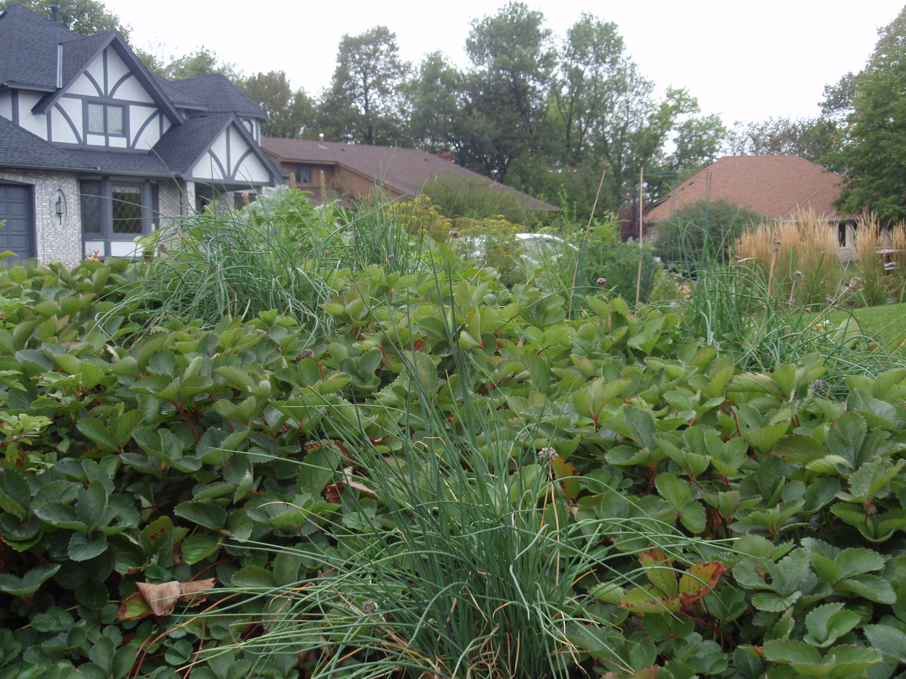 faqs growing in the twin cities with backyard harvest