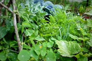Backyard Harvest garden